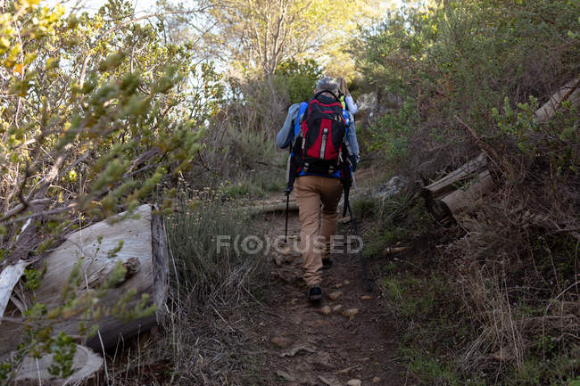 Rear view of a mature Caucasian man and woman wearing backpacks and using Nordic walking sticks walking single file up hill on a trail during a hike — Stock Photo