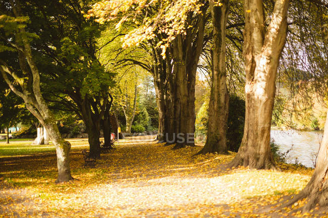 Row of trees in the park during day. — Stock Photo