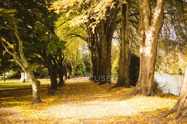 Fila di alberi nel parco durante il giorno . — Foto stock