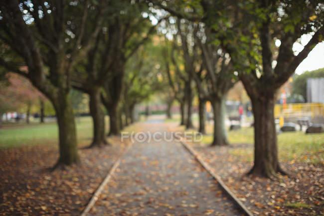 Ligne des arbres dans le stationnement pendant la journée. — Photo de stock