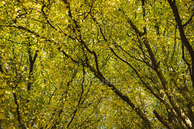 View of autumn tree during day. — Stock Photo