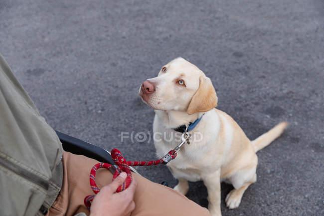 Высокий угол средняя часть человека в инвалидной коляске гуляет со своей собакой, собака сидит на тротуаре глядя на него — стоковое фото