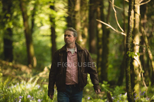 Man hiking in countryside at forest on a sunny day — Stock Photo