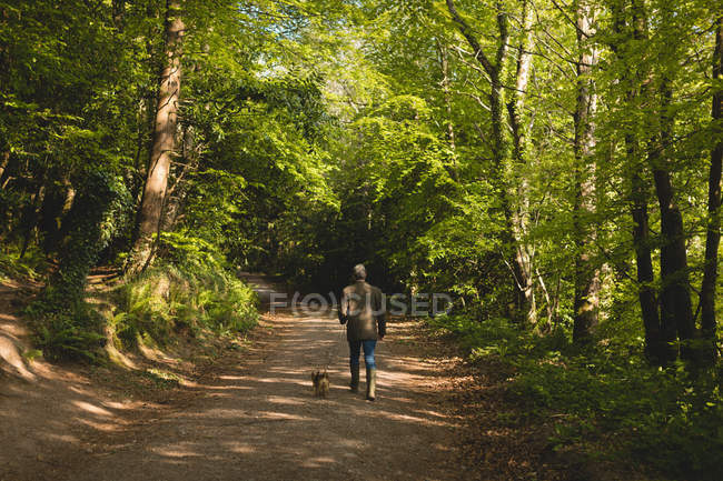Rear view of man walking with dog in forest on a sunny day — Stock Photo