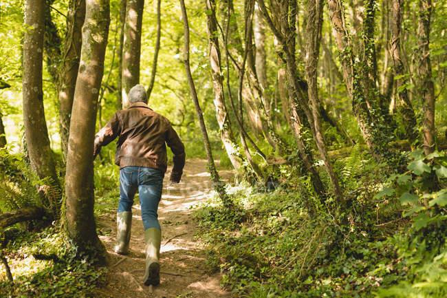 Visão traseira do homem correndo na floresta em um dia ensolarado — Fotografia de Stock