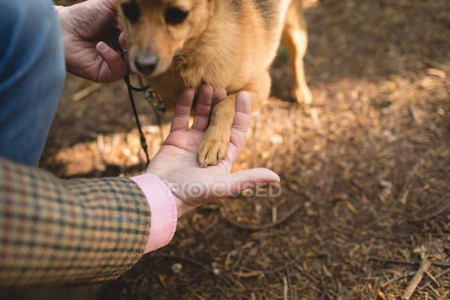 Homme mûr avec son chien de compagnie dans la forêt — Photo de stock