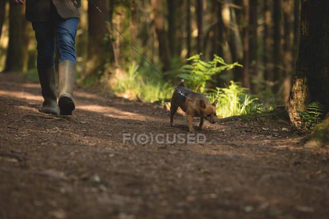 Section basse de l'homme marchant avec son chien de compagnie dans la forêt — Photo de stock