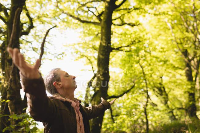 Блаженный человек стоит с распростертыми в лесу руками в солнечный день — стоковое фото