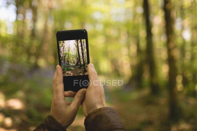 Mano dell'uomo cliccando foto dal telefono cellulare nella foresta — Foto stock