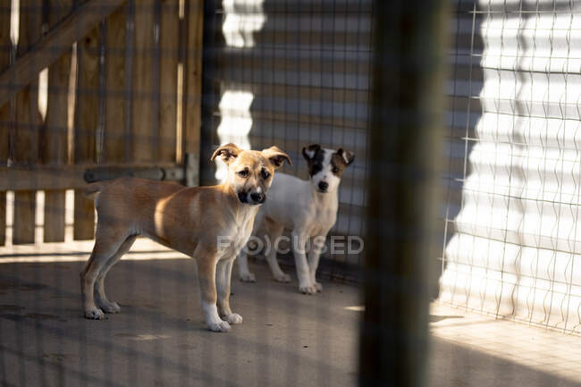 Front view of two rescued abandoned dogs in an animal shelter, standing in a cage in the shadow during a sunny day. — Stock Photo