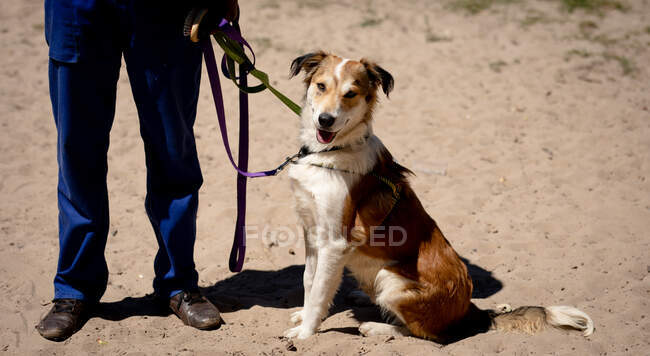 Front view low section of a male volunteer at an animal shelter, keeping a dog on a leash on a sunny day. — Stock Photo