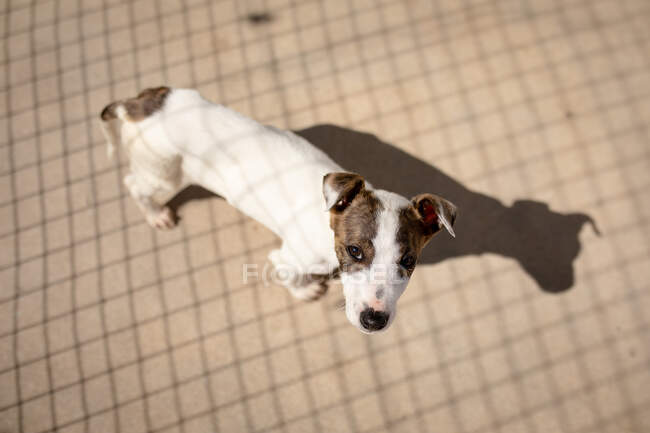 High angle view of a rescued abandoned dog in an animal shelter, standing in a cage in the sun looking straight to camera. — Stock Photo