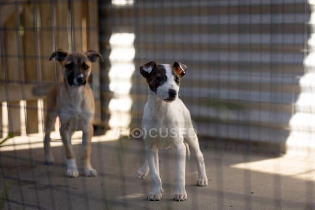 Vue de face de deux chiens abandonnés sauvés dans un refuge pour animaux, debout dans une cage à l'ombre pendant une journée ensoleillée. — Photo de stock
