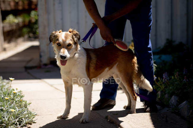 Front view low section of a male volunteer at an animal shelter, keeping a dog on a leash and grooming on a sunny day. — Stock Photo