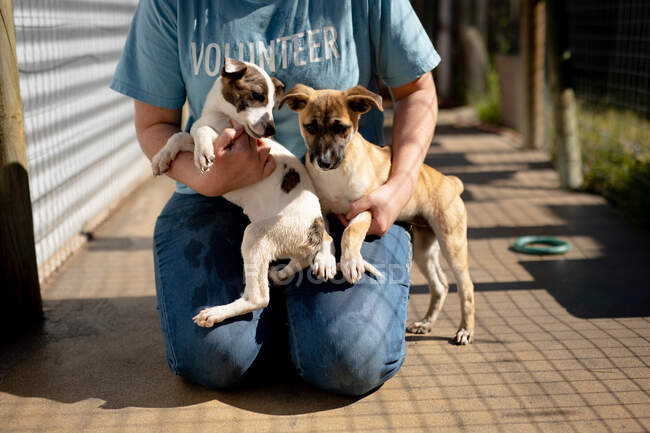 Front view mid section of a female volunteer wearing a blue uniform at an animal shelter petting two rescued dogs. — Stock Photo