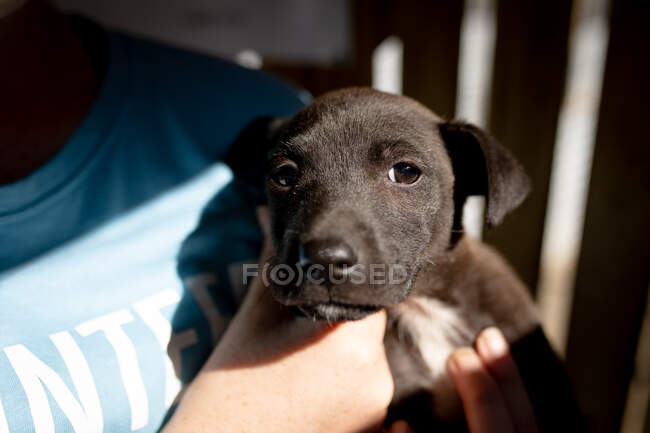 Front view mid section of a female volunteer wearing blue uniform at an animal shelter holding a rescued puppy in her arms. — Stock Photo