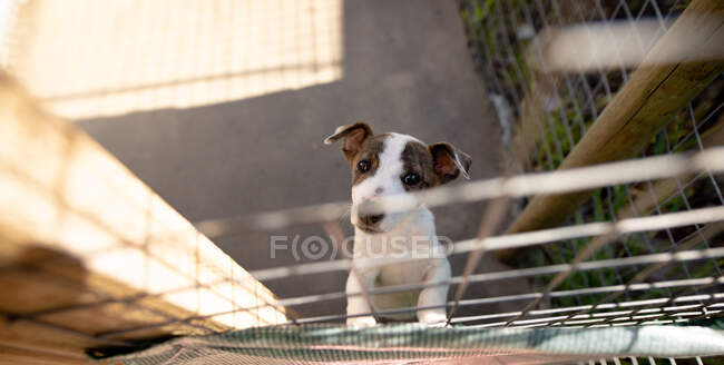 Front high angle view of a rescued abandoned dog in an animal shelter, standing in a cage on a sunny day. — Stock Photo