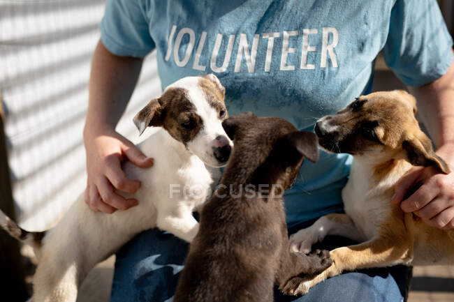 Front view mid section of a female volunteer wearing a blue uniform at an animal shelter petting three rescued dogs. — Stock Photo