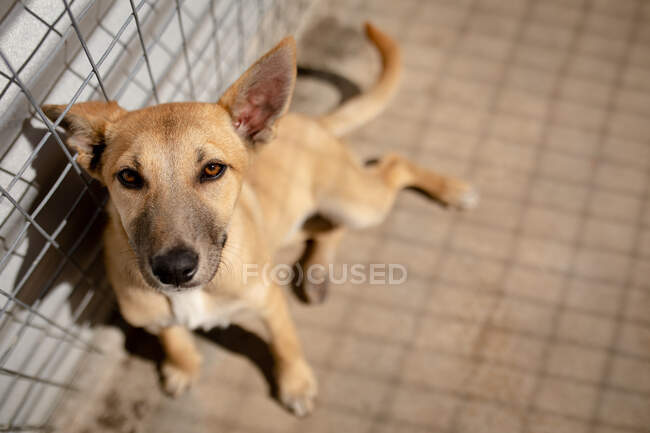 Front view close up of a rescued abandoned dog in an animal shelter, sitting in a cage in the sun looking straight to camera. — Stock Photo
