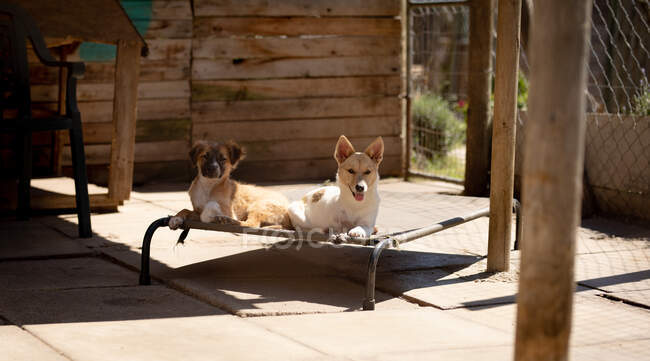 Front view of two rescued abandoned dogs in an animal shelter, resting and lying in a cage on a sunny day. — Stock Photo