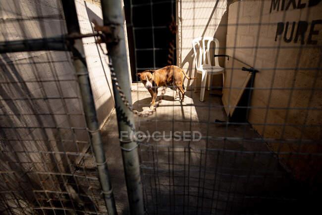Бічний вид врятованого пса в притулку для тварин, що стоїть у клітці в сонячний день.. — стокове фото