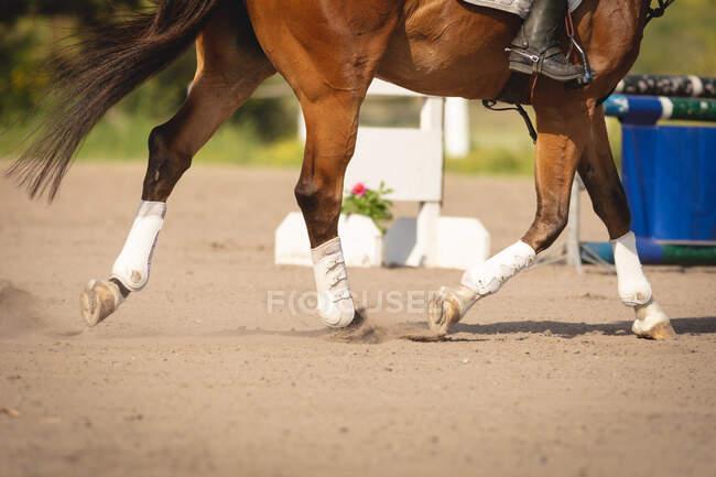Вид сбоку низкая секция сапоги верховой езды и шпоры всадника верхом на каштановой лошади на шоу прыжки событие в солнечный день, рысь между заборами — стоковое фото