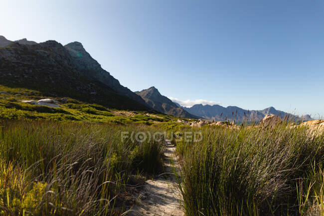 Walking trail through tall, green grass with mountains and blue, clear sky in the background on a sunny day. Beautiful natural scenery by the coast. — Stock Photo