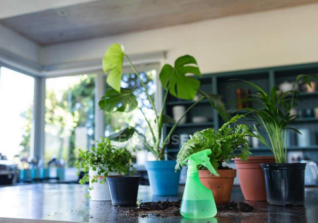 Primer plano de plantas en macetas sobre mesa en cocina. en casa en aislamiento durante el bloqueo de cuarentena. - foto de stock