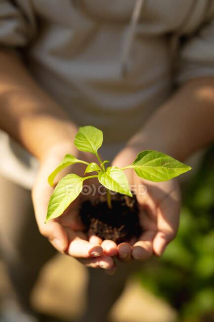 Sección media de niña sosteniendo plántulas de plantas en el jardín. en casa en aislamiento durante el bloqueo de cuarentena. - foto de stock