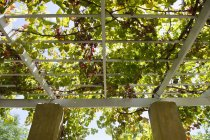Low-angle view of tree branches over porch — Stock Photo