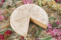 Almacenamiento de queso Saint-Nectaire, Auvernia, Francia - foto de stock