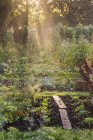 Ortaggi verdi che crescono in giardino a L'Aigle, Orne, Normandia, Francia — Foto stock