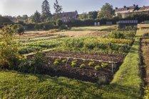 Зеленые овощи, растущие в саду в L 'Aigle, Orne, Нормандия, Франция — стоковое фото