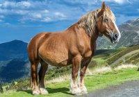 Pferd in den Bergen am col de moulata, Frankreich, Nationalpark Pyrnes — Stockfoto