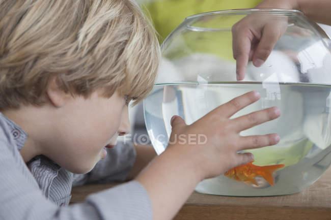 Крупный план маленького мальчика, смотрящего на аквариум — стоковое фото