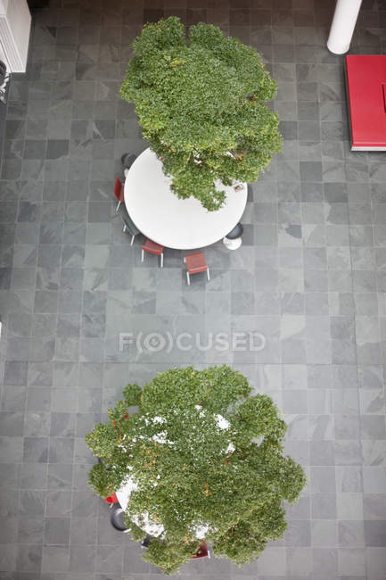 High angle view of bonsai trees growing on tables in office lobby — Stock Photo