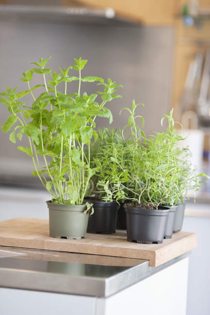 Surtido de plantas herbales en macetas en el mostrador de cocina - foto de stock
