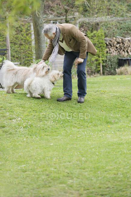 Взрослый мужчина играет с симпатичными собаками в саду — стоковое фото