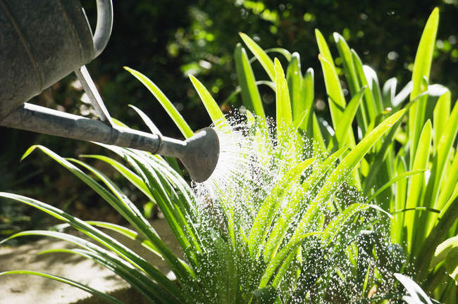 Close-up of watering can watering plants in garden — Stock Photo