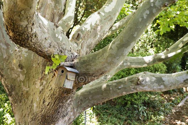 Крупный план скворечника, висящего на дереве в летнем саду — стоковое фото