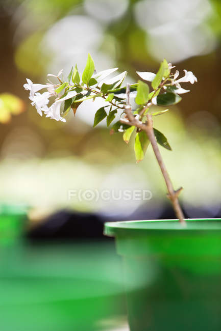Piante in vaso in giardino, focus selettivo — Foto stock
