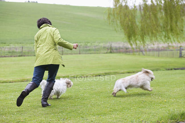 Женщина играет с собаками на зеленом поле — стоковое фото