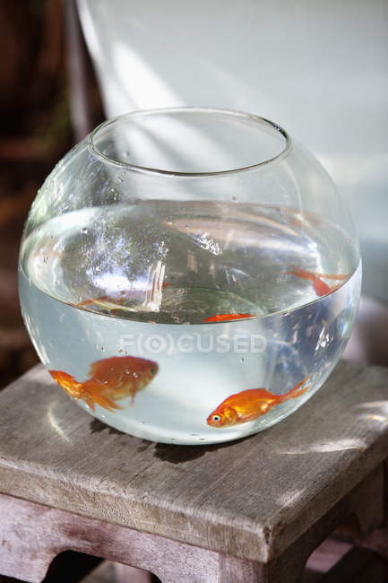 Close-up of goldfishes in fishbowl, selective focus — Stock Photo