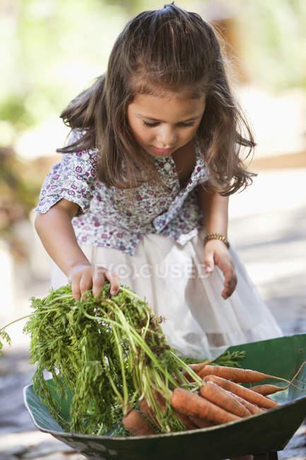 Carino bambina mettendo carote in carriola — Foto stock