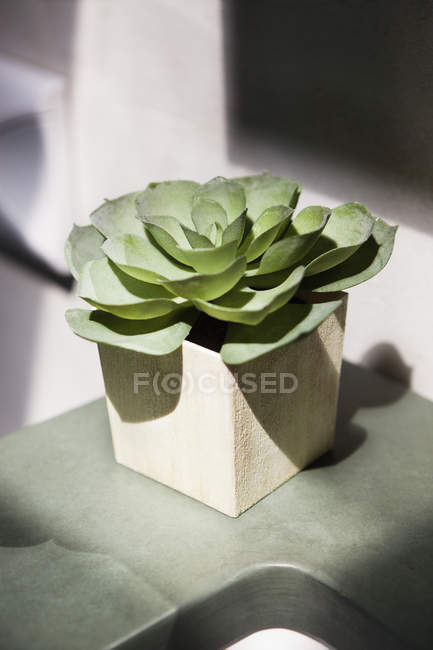 Close-up of succulent plant growing in pot — Stock Photo