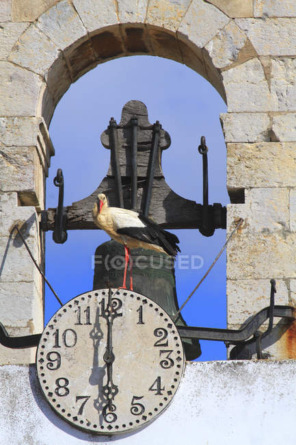 Stork on Bell Tower at Portugal, Algarve — стокове фото
