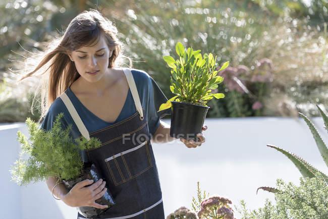 Молодая женщина в фартуке перевозит горшки с растениями на открытом воздухе — стоковое фото