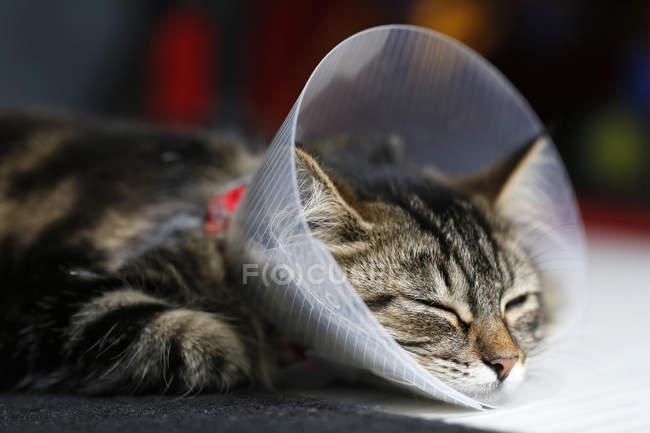 Kätzchen im Halsband, selektiver Fokus — Stockfoto