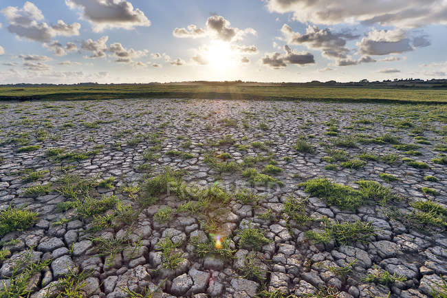 Sunset on marshes drained by heat wave — Stock Photo