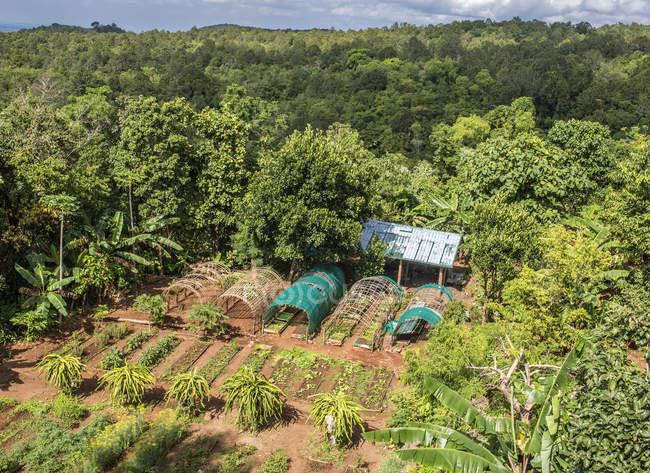 Orto nella foresta tropicale del Mountain Resort — Foto stock